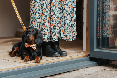 dog wearing a bowtie and matching lead